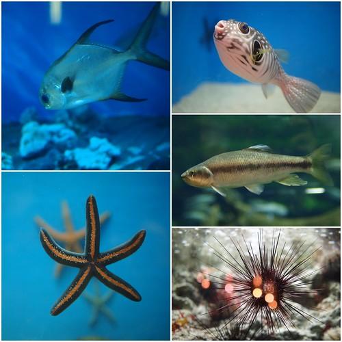國立海洋生物博物館2