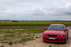 Ma Jaguar X-Type au bord d'un champs de tournesols