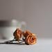 Roses by isa_jga