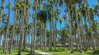 Image of Palmentuin. suriname paramaribo surinam sr