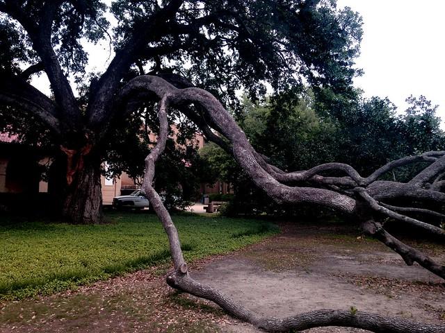 oaks5