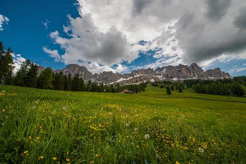 italy mountain flower field june italia montagna dolomites dolomiti rosengarten altoadige d800 catinaccio sudtirol 1424 eggental valdega lerrysan