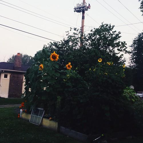 2014-08-06 06.42.50 1