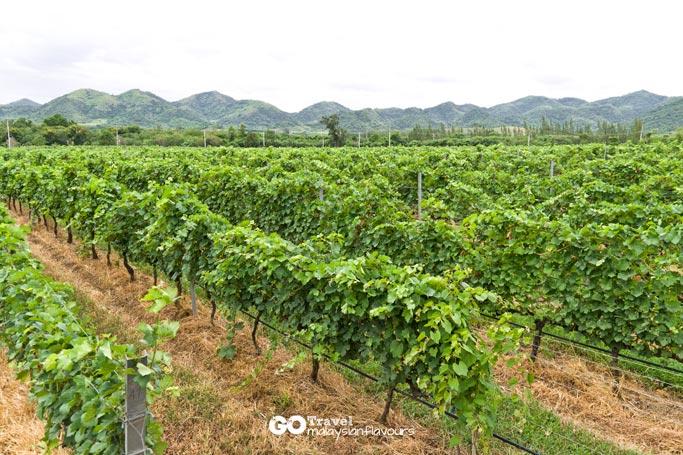hua-hin-3d2n-hua-hin-hills-vineyard