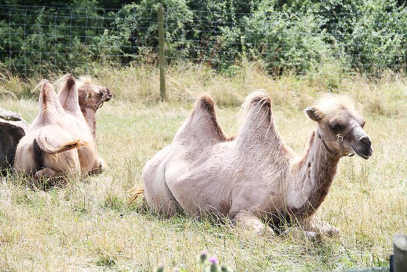 ystads djurpark med mamma och pappa