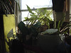 windowplant04_150dpi