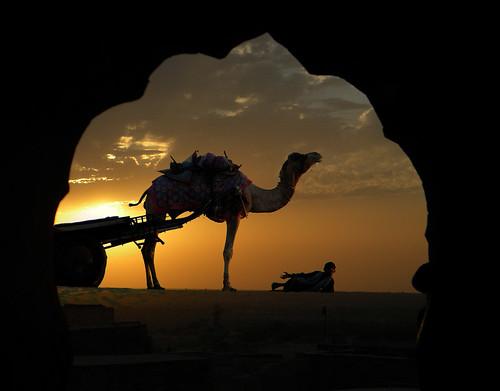 Jaisalmer Hotel Suraj Overlaid with Camel