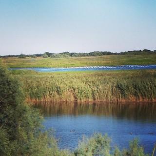 La laguna e gli uccelli   #viaggioinromagna #giriingiro #ig_emiliaromagna #igersemiliaromagna