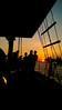 Darwin Sunset - silhouettes