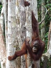 Borneo '14