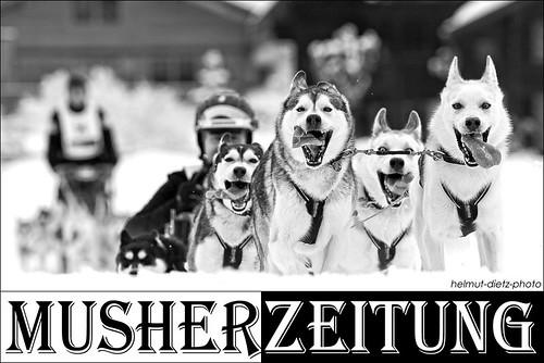 Schlittenhunde Weltmeisterschaften 2014, Kandersteg, CH: -Meino Jauch, Siberian Husky - Team