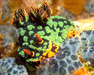 "<img src=""padi-adventure-diving-tioman-island-malaysia.jpg"" alt=""PADI Adventure Diving, Tioman Island, Malaysia"" />"