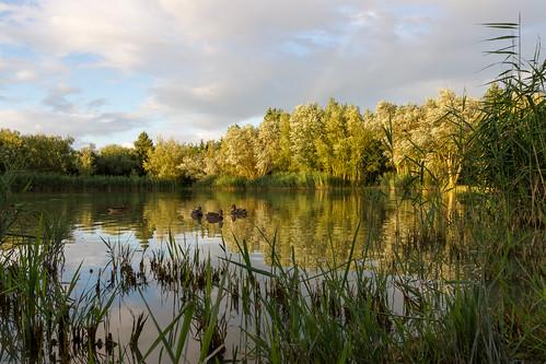 summer england lake fish canon fishing pond unitedkingdom 7d carp highbridge emeraldpool angling sedgemoor coursefishing