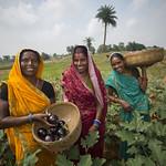 Increasing Food Security