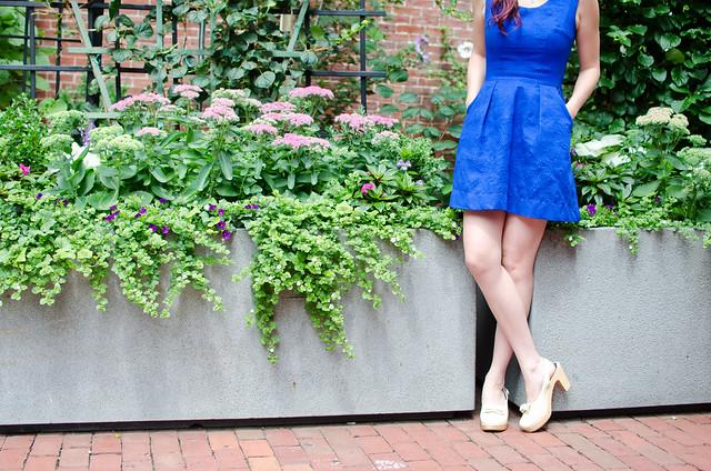 Blue belladonna