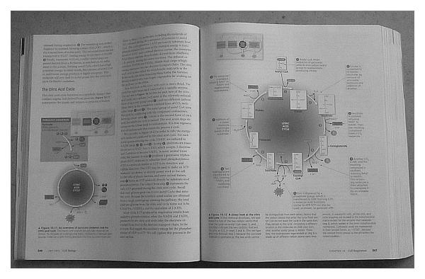 Kuva Campbelin Biology-kirjasta.