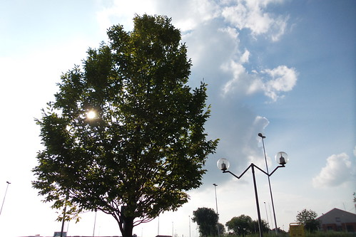 Il lampione ci presenta un albero by Ylbert Durishti