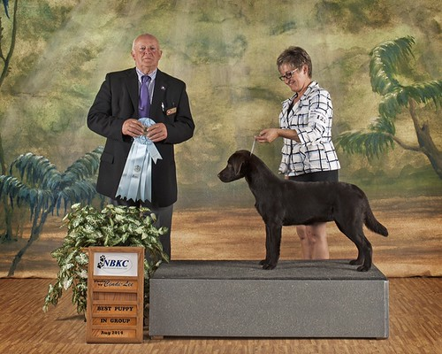 Annalou earns Best Puppy in Group at 7 months
