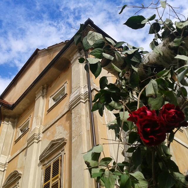 Kartano ja ruusuja