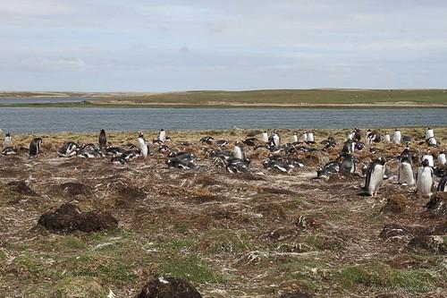 Autor: Project Penguins