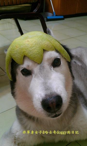 玉兔月餅柚子08