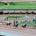 Thoroughbred Racing at Ruidoso Downs