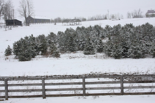 Christmas Tree Farm - Woodford Co KY 1