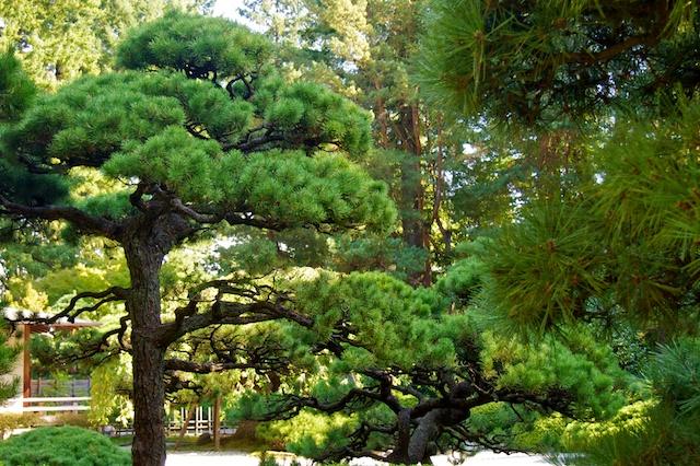Portland Japanese Garden + Rose Garden