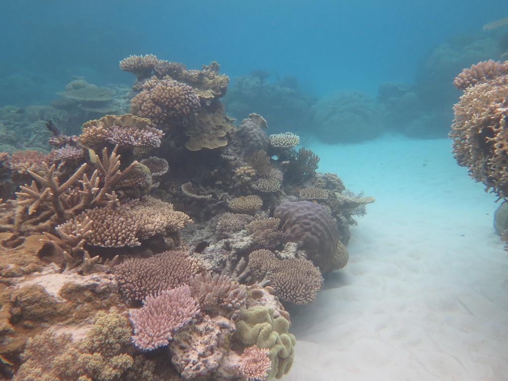 great barrier reef, opal reef, wavelength tours, port douglas, low isles, opal reef, snorkelling