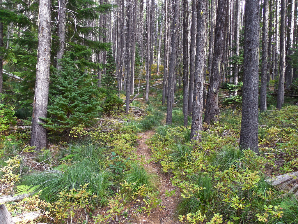 Trail 178: Kootenai National Forest