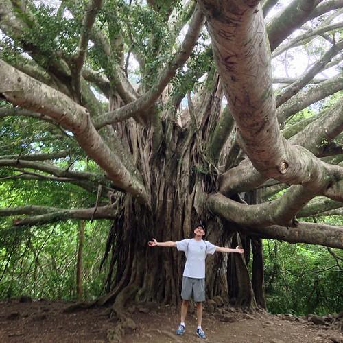 It was this big! Banyan tree on Maui.