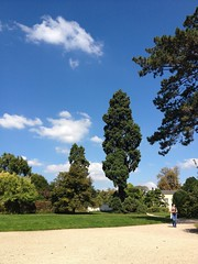 Random Sequoia Tree in the middle of Versailles