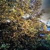 Herbstlicht 2.