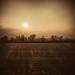 Radiant Land *with Holga Lens*