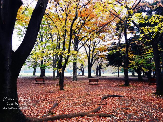 日本東京景點澀谷區代代木公園賞楓葉 (14)