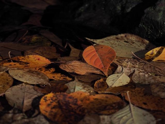 autumn colors, Olympus E-M1, Lumix G X Vario PZ 45-175mm F4.0-5.6 Asph. Power OIS