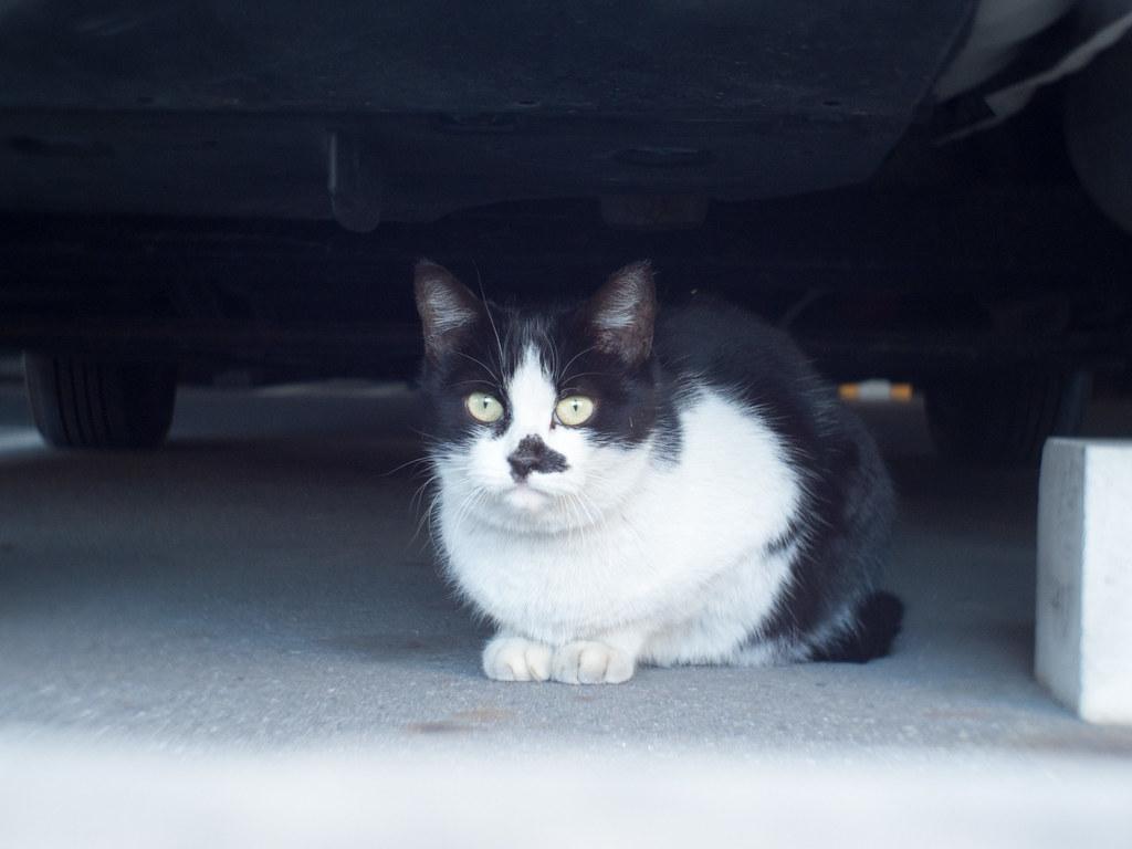 Stray cat f/2.8