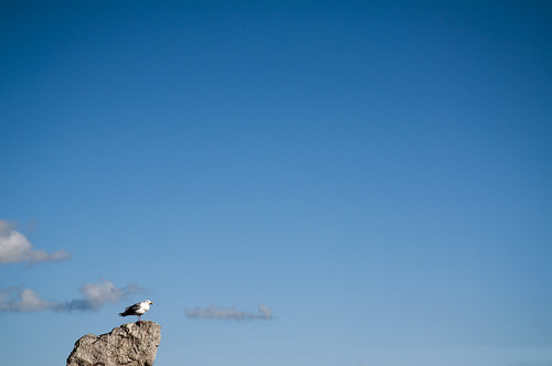 Seagull on a rock