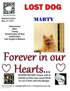 Lost Dog _Marty