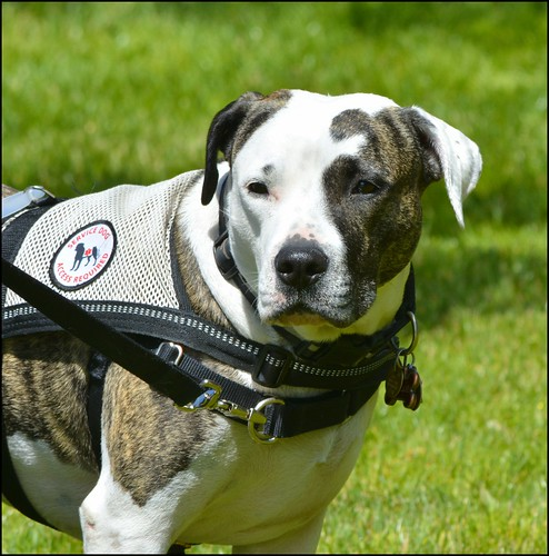 Mighty Texas Dog Walk a Huge Hit - Loewy Law Firm