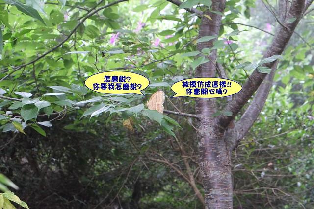 2014.06.22[新竹五峰]兔子先生現身了067