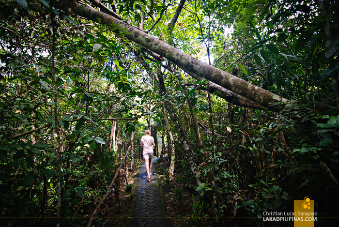 The Trail to the Sanctuary at the Philippine Tarsier & Wildlife Sanctuary in Bohol