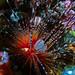 Sea Urchin by billunder