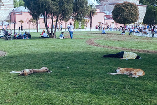 How the locals relax