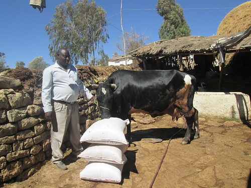 Ato Nurhussien holding the first born of his first cow (Photo:ILRI\Yaynesht Tesfay)
