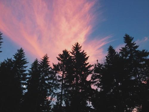 trees sky clouds washington pacificnorthwest pnw vsco vscocam