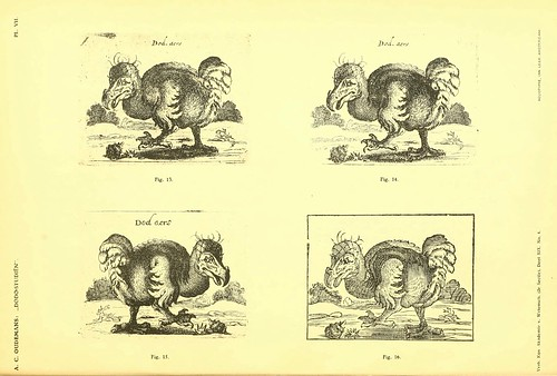 003-Dodo-studiën…1917- Anthonie C. Oudemans- Biodiversity Library