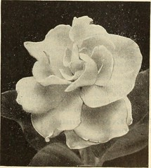"Image from page 158 of ""Dreer's garden book 1915"" (1915)"