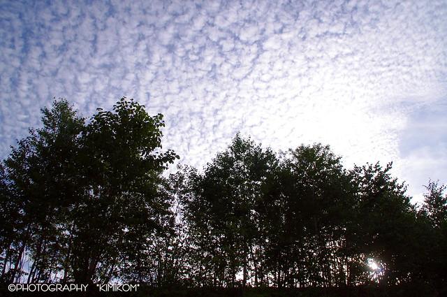 うろこ雲の空2