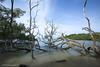 trees at sea XOKA1617bs